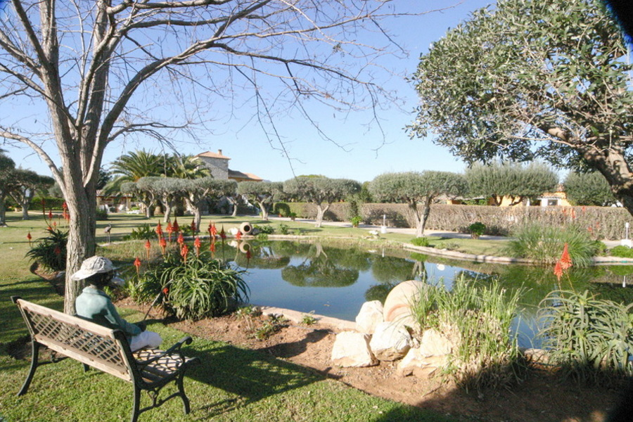 Garden and fish pond